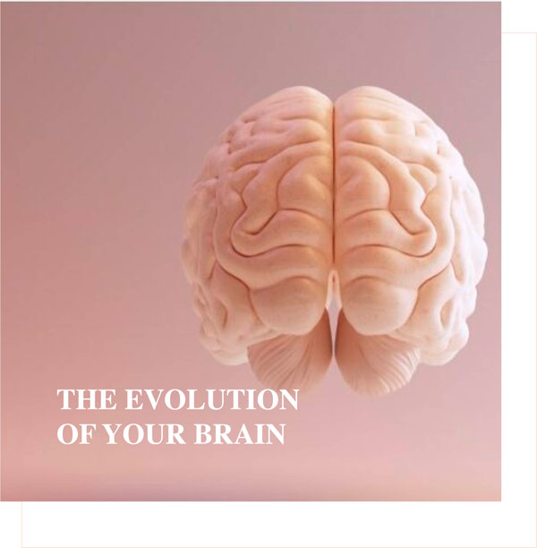 the evolution of your brain - Charlotte Labee