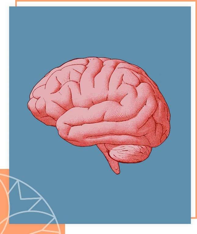 Omega 3 is goed voor je hersenen
